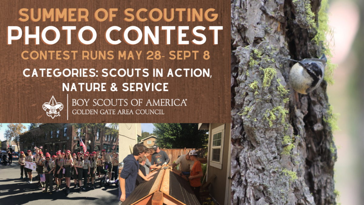 Graphic advertising Photo Contest. Thumbnails of Scouts in Action and Scouts service project work.