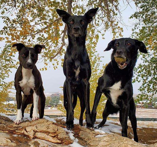 Team Goggin, Breezie Demo Dog of the Month winners