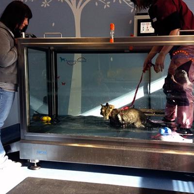 Cat in underwater treadmill