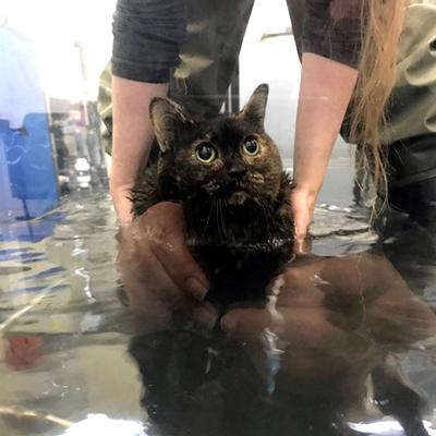 Cat in water
