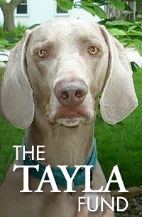 The Tayla Fund