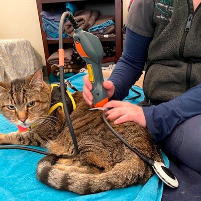 Cat having PEMF treatment