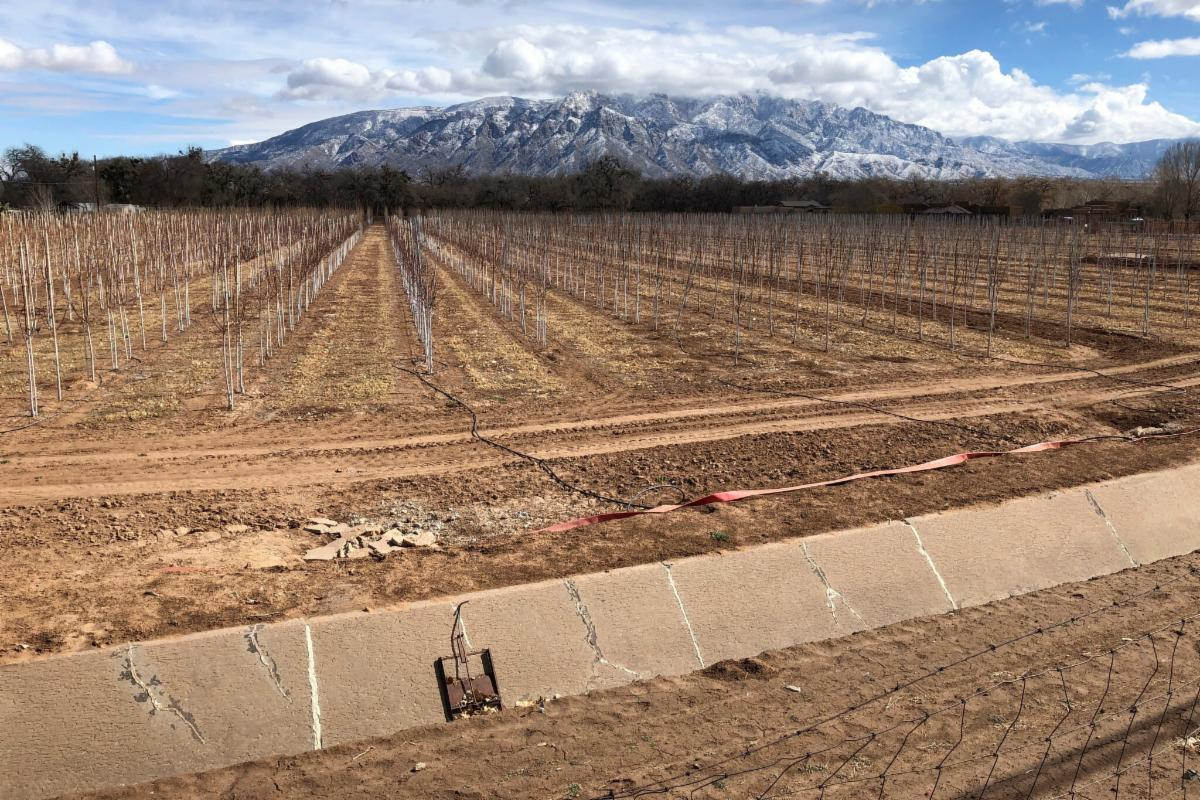 A dry irrigation ditch surrounded by dry soil and trees. Snowy mountain in the distance