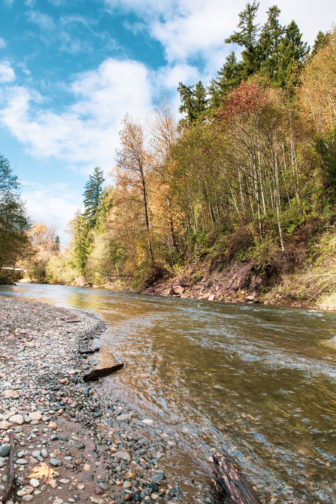 Image of a river. Rocky riverbed on the left. River flowing through the middle. Trees and hilled river bank on the right. Blue sky and clouds in the background.